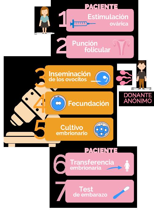 fases de la fecundación in vitro con semen de donante