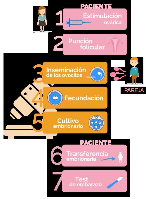 fases de la fecundación in vitro con semen de la pareja