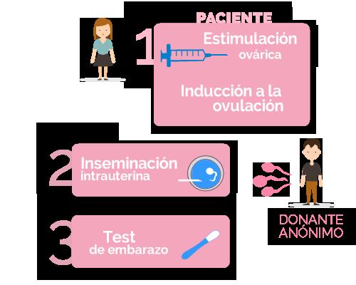 fases de la inseminación artificial con semen de donante anónimo