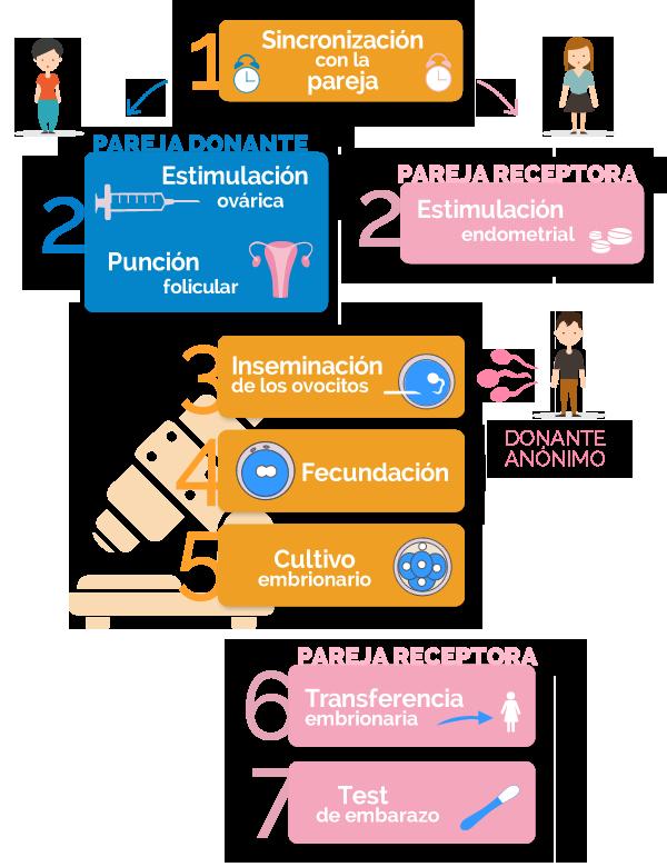 fases del método ROPA de maternidad compartida para parejas de lesbianas
