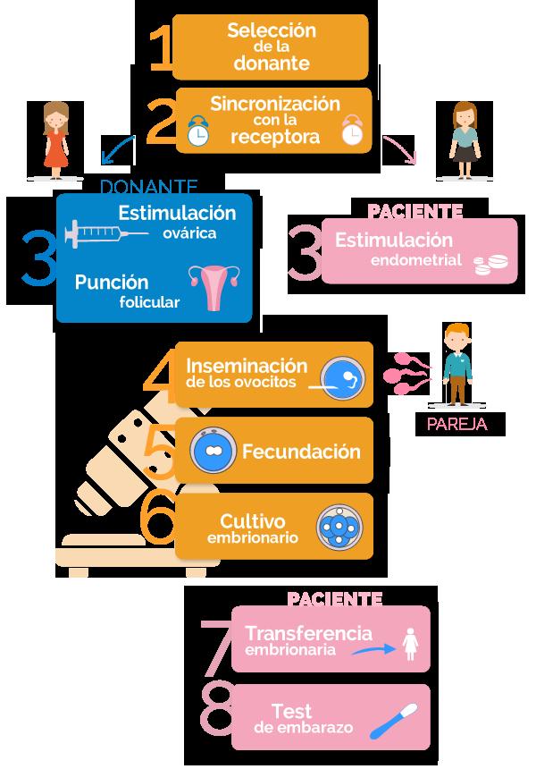 fases de la fecundación in vitro con ovodonación y semen de la pareja