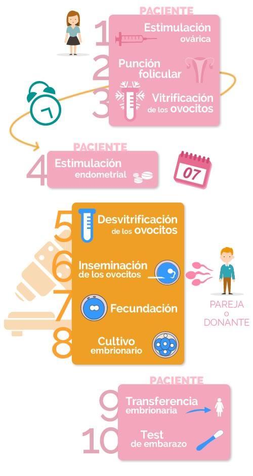 fases de la preservación de la fertilidad