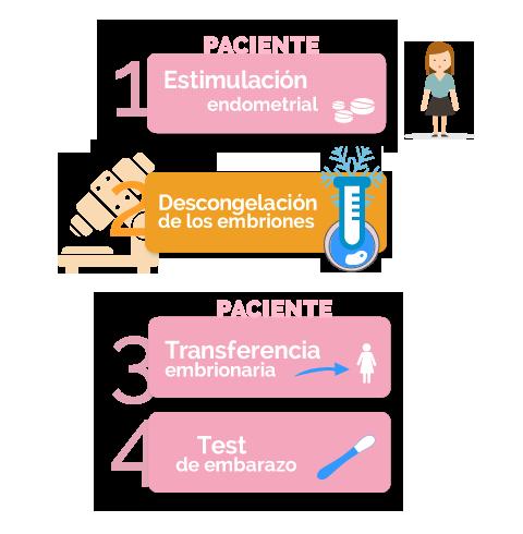 fases de la transferencia de embriones