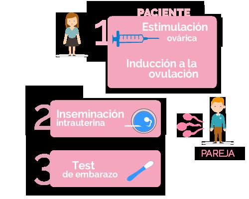 fases de la inseminación artificial con semen de la pareja